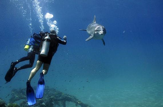 Delphinschwimmen am Roten Meer