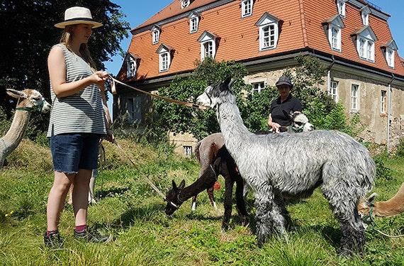 Alpaka Spaziergang für 2