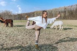 Alpaka Yoga Bergheim für 2