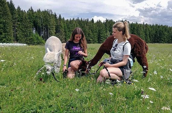 Alpakawanderung & Picknick Allgäu für 2