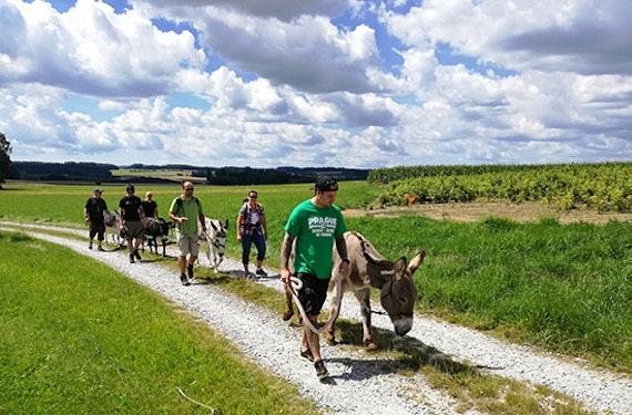 Esel-Trekking-Tagestour im Waldviertel