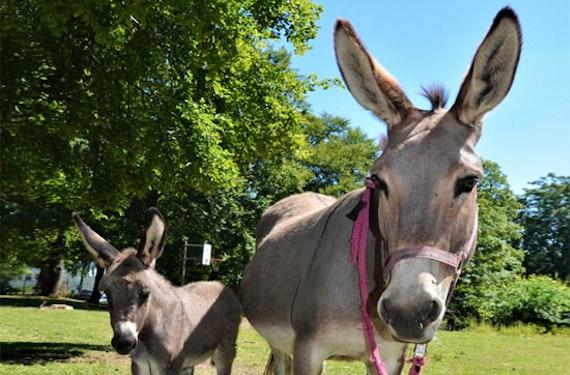 Geführte Eselwanderung für Familien im Sauerland