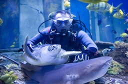 Exklusiv: Hai-Tauchen im SEA LIFE München