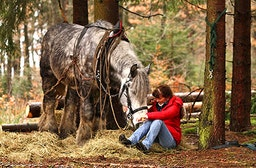 Holzrücken mit Pferden im Bergischen Land