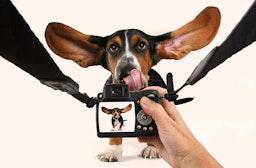 Hunde-Fotoshooting