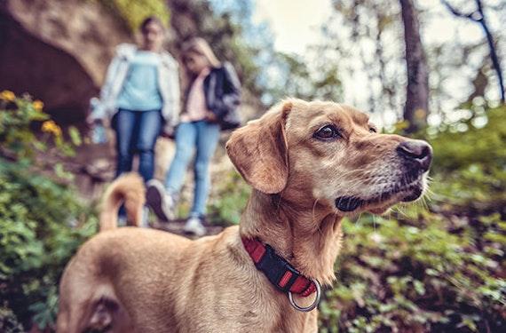 Kurzurlaub mit Hund in Seefeld für 2