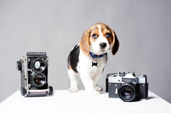 Hunde-Fotoshooting Schweiz