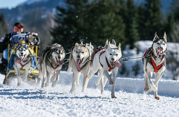 Husky-Ausfahrt in der Oberpfalz für 2