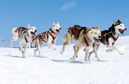 Husky-Ausfahrt & -Trekking im Altmühltal