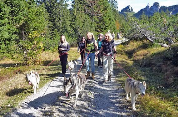 Husky-Trekking am Walensee
