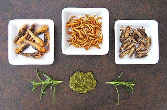 Snack Insects Kochset für Zuhause Österreich