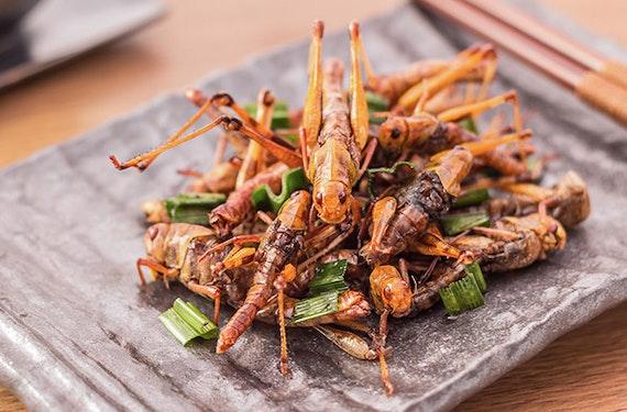 Insekten-Kochkurs