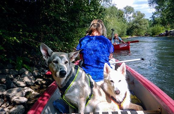 Kanufahrt und Hunde Trekking in Büren