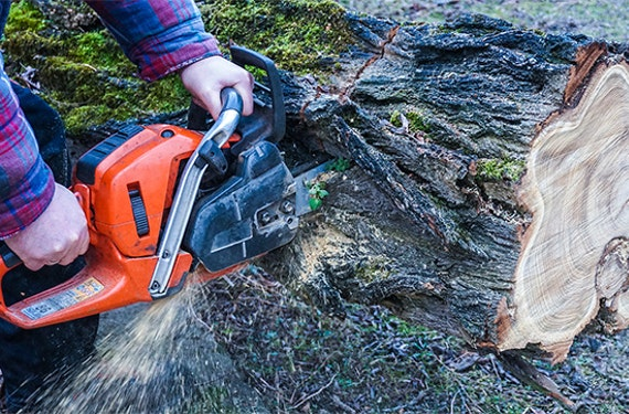 Holzfäller-Kurs mit Kettensägenschein