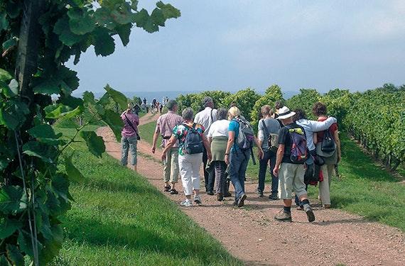 Kräuterwanderung Volxheim