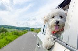 Kurzurlaub mit Hund für 2