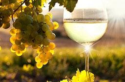 Wein-Kurzurlaub im Rheingau für 2