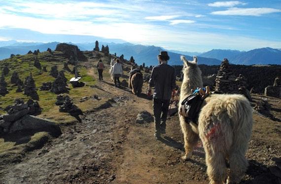 Lama Trekking bei Meran