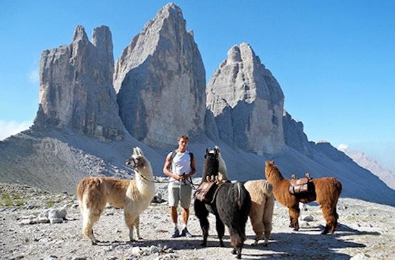 Lama Trekking mit Übernachtung in den Drei Zinnen