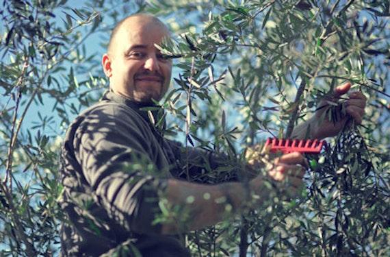 Olivenöl Verkostung in Wien
