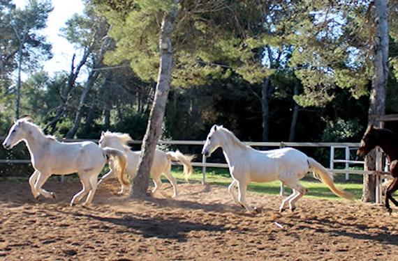 Ausreiten auf Mallorca