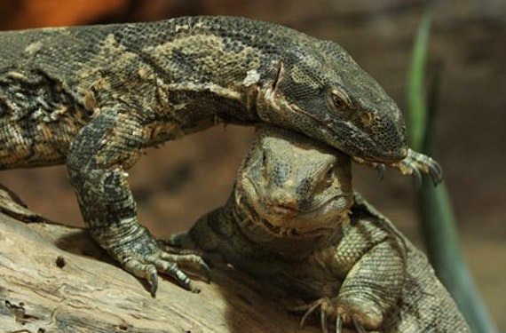 Reptilien-Fütterung in Landau