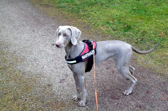 Suchhunde-Training
