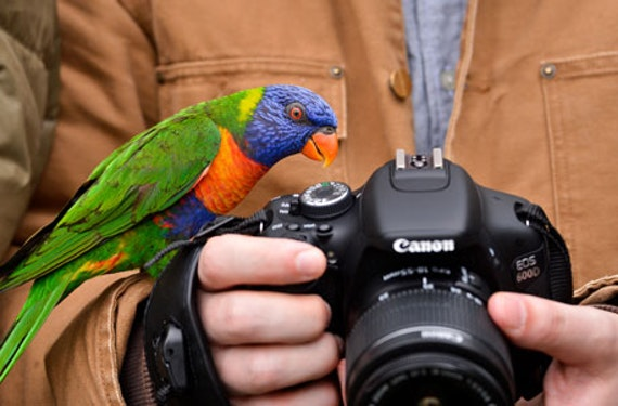 Tierfotografie für Einsteiger im Tierpark