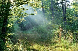 Waldbaden Haßloch