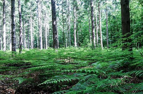 Waldbaden in Sonsbeck für Frauen (3,5 Std.)