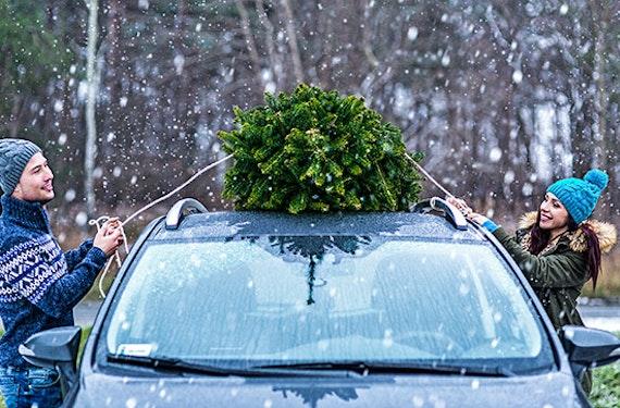Weihnachtsbaum fällen für 2