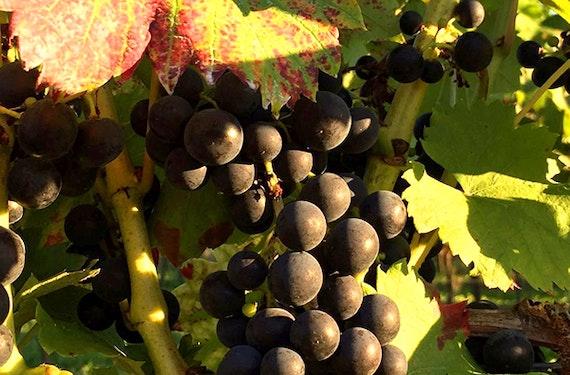 Weinprobe online