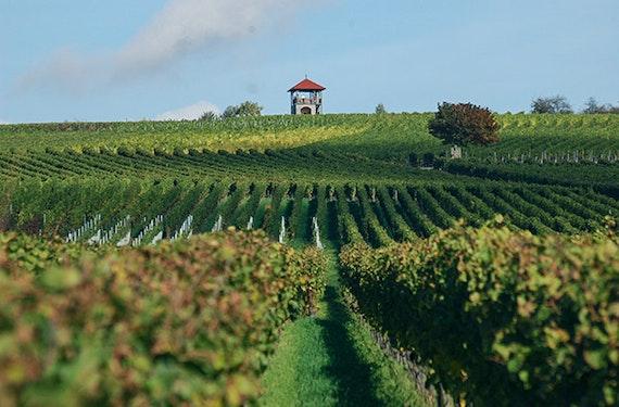 Weinverkostung Volkach