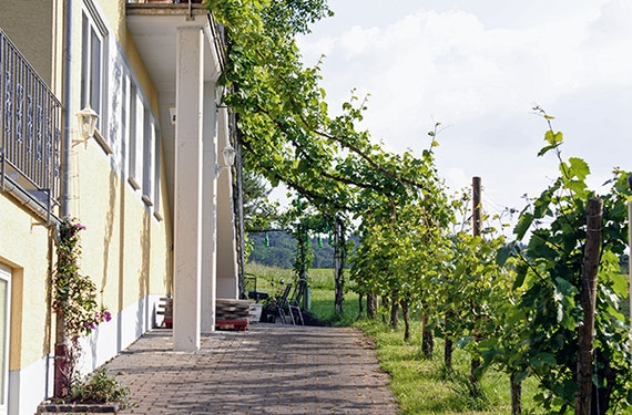 Weinverkostung Bernkastel-Kues für 2