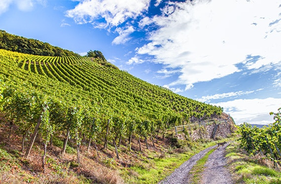 Weinwanderung Grünstadt inkl. Barbeque