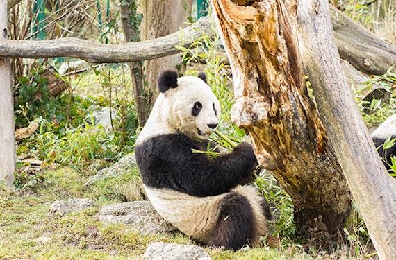 Kurzurlaub Wien mit Tiergarten Besuch für 3 (3 Tage)