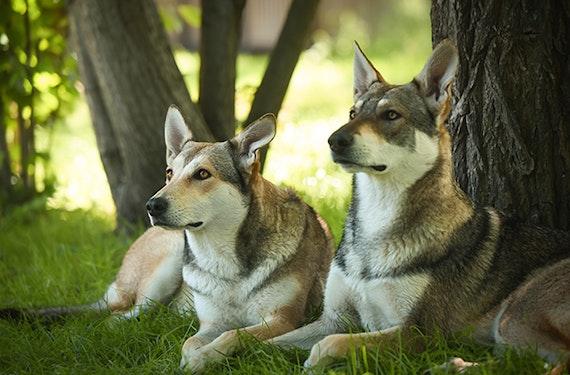 Wolfshund Trekking Büren