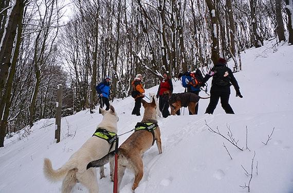 Schneeschuhwandern mit Wolfshunden in Büren